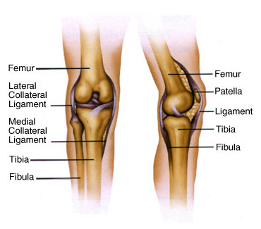 Lateral Collateral Ligament Tear Surgery Cape Town Dr Richard Von